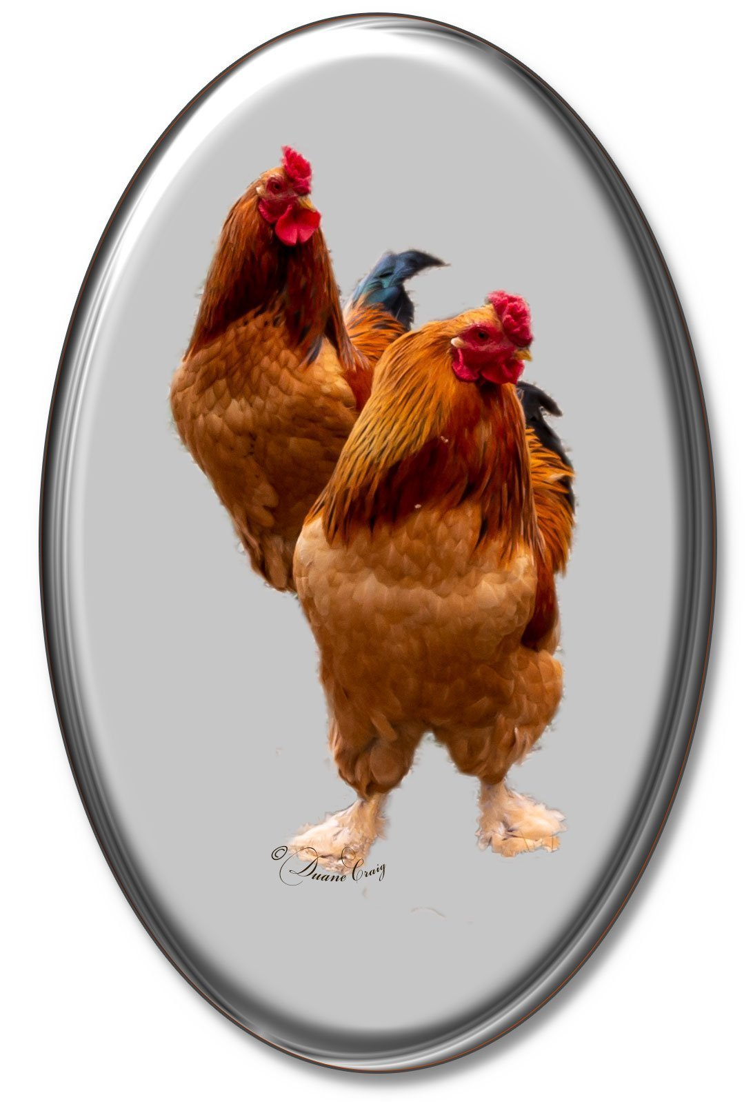 Rooster Product Art