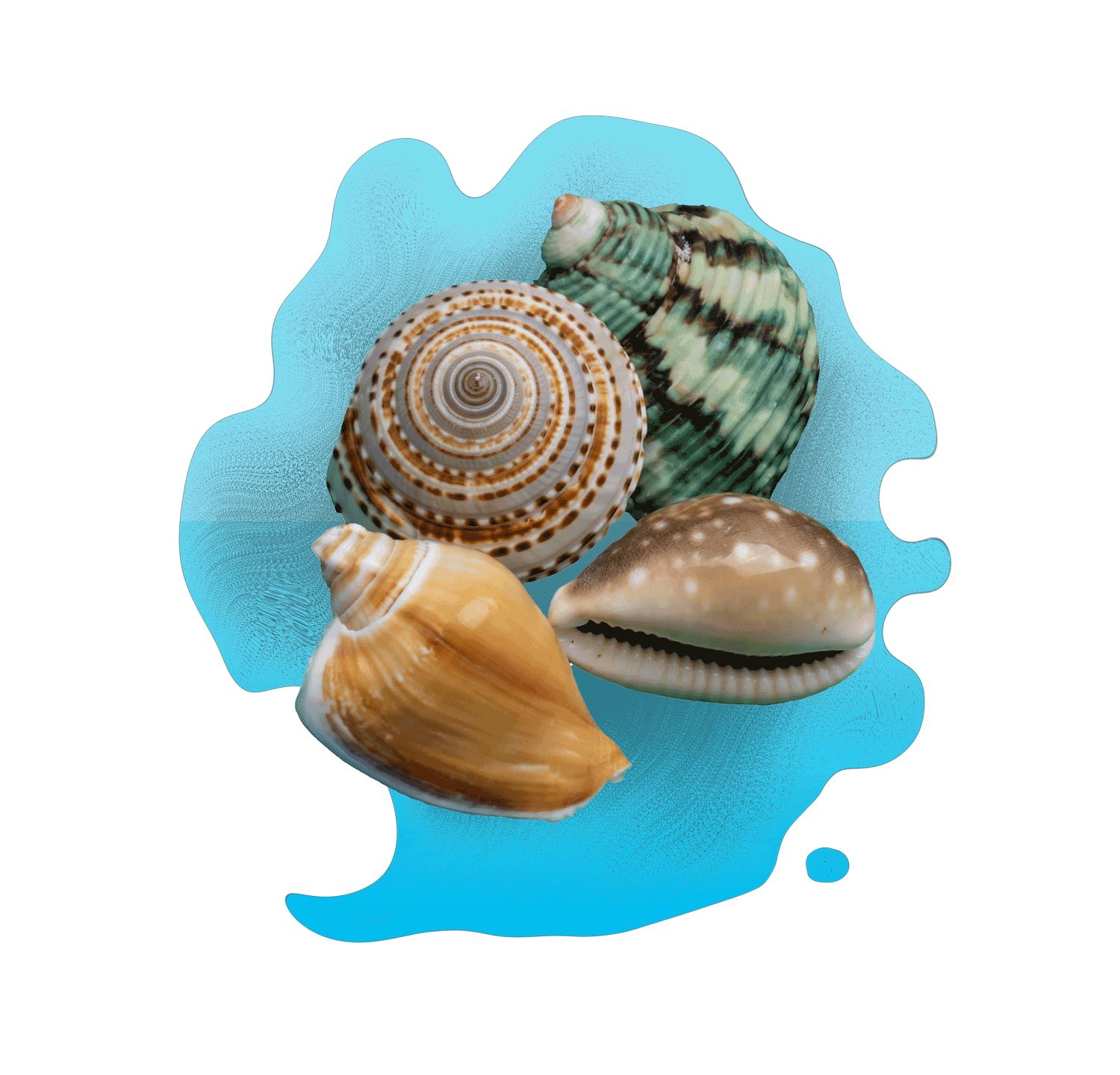 product art in seashells with frosted glass